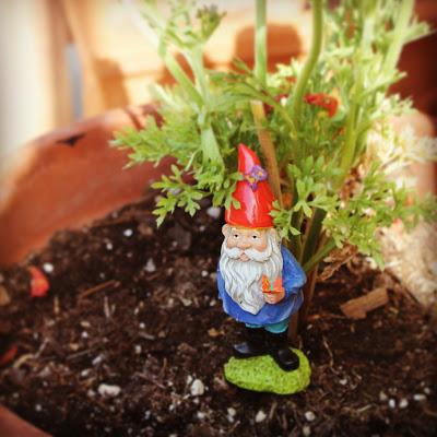 Felgar the gnome