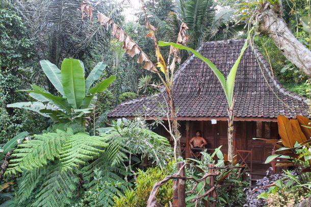 A Bit of Bees Knees | Ubud + Sekumpul Bali
